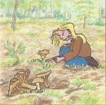 La charte du ramasseur de champignons